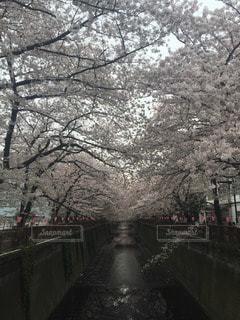 春 - No.111719