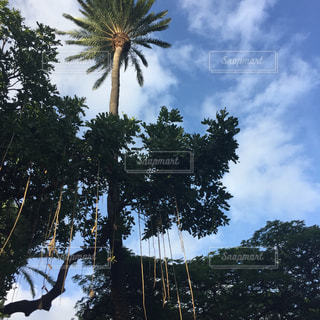 ヤシの木の写真・画像素材[357062]