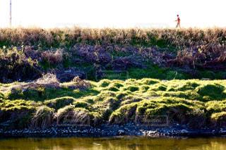 草や木のある大きな水域の写真・画像素材[2919708]