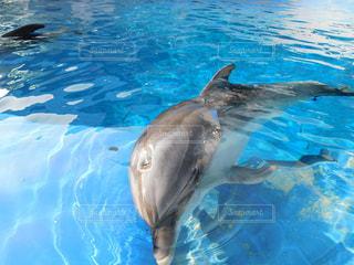 イルカの写真・画像素材[2909356]