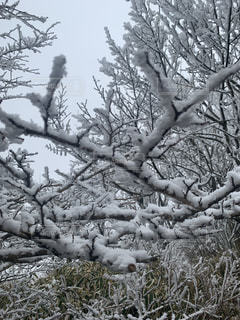 木の枝に座っている男性のグループの写真・画像素材[2925110]