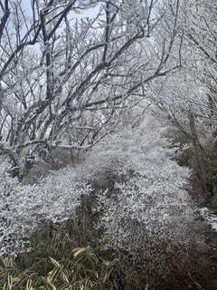 地面に雪が降った木の写真・画像素材[2925112]