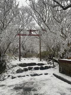 木の隣にある雪に覆われた公園のベンチの写真・画像素材[2925114]