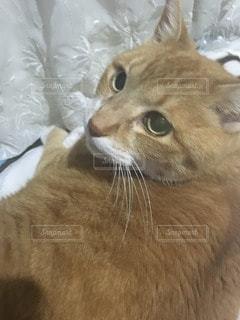 猫 - No.113642
