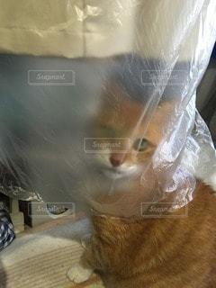 猫 - No.113712
