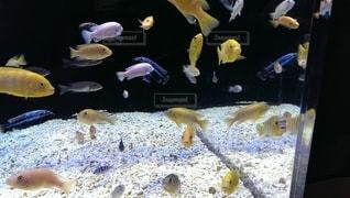 水の中の魚のグループの写真・画像素材[2924039]