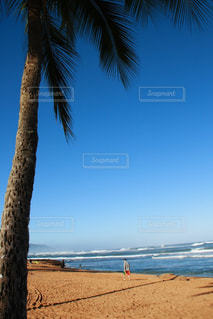 ヤシの木のあるビーチの写真・画像素材[2918317]