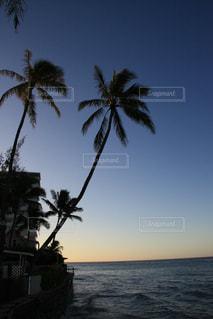 ヤシの木のあるビーチの写真・画像素材[2918326]