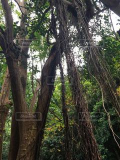 森に迷い込むの写真・画像素材[2928349]