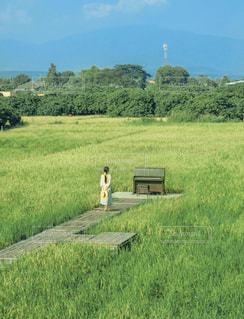 草に覆われた畑の写真・画像素材[2924238]