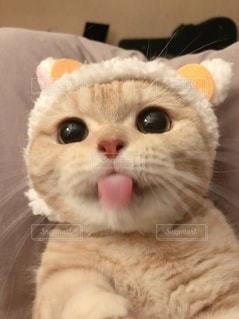 猫のクローズアップの写真・画像素材[2933634]