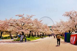 桜と観覧車の写真・画像素材[2914933]