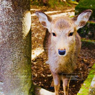 草の中に立っている鹿の写真・画像素材[2914967]