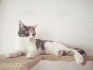 猫とキャットタワーの写真・画像素材[2918263]