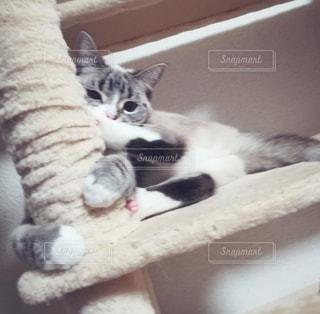 猫キックの写真・画像素材[2918395]