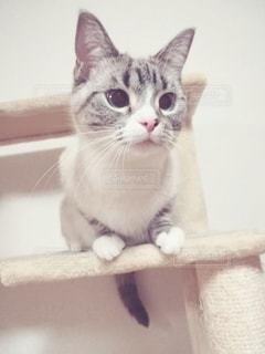 見つめる猫の写真・画像素材[2918394]