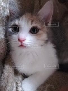 猫のクローズアップの写真・画像素材[2920766]