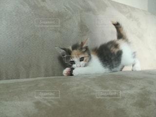 子猫の写真・画像素材[2920771]