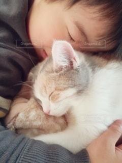 子猫と寝る男の子の写真・画像素材[2929912]
