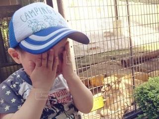 ライオンを怖がる男の子の写真・画像素材[2953636]
