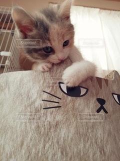 爪研ぎを噛む子猫の写真・画像素材[2958948]