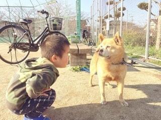 犬と見つめ合う男の子の写真・画像素材[2995742]