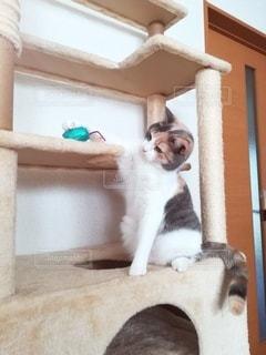 ネズミの玩具で遊ぶ猫の写真・画像素材[3044270]