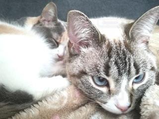 白い背景に横たわる猫のクローズアップの写真・画像素材[3057957]