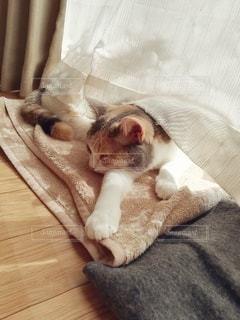 窓際で寝ている猫の写真・画像素材[3060336]