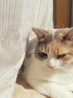 毛布の上に横たわっている猫のクローズアップの写真・画像素材[3060335]