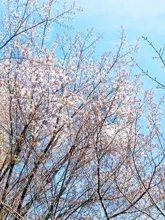 木のクローズアップの写真・画像素材[3079074]