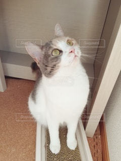 爪研ぎの上に座っている猫の写真・画像素材[3079543]