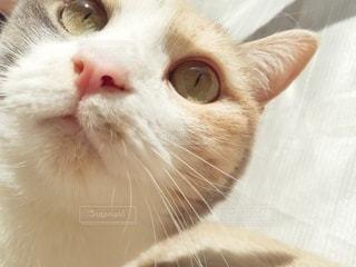 猫のクローズアップの写真・画像素材[3079545]