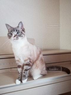 ピアノに座っている猫の写真・画像素材[3088253]