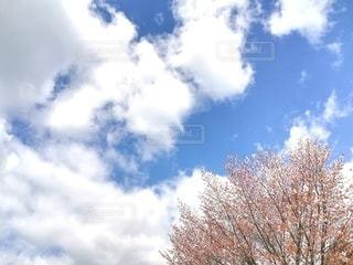 曇りの日の木の写真・画像素材[3107850]