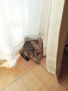 横になってカメラを見ている子猫の写真・画像素材[3293646]