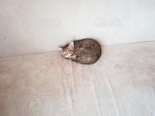 保護猫の写真・画像素材[3296455]