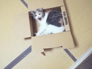 箱の中に座っている猫の写真・画像素材[3636315]