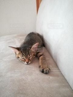 ソファに横たわる猫の写真・画像素材[3636380]