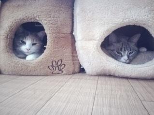 2匹の猫の写真・画像素材[3856929]