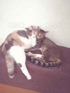 2匹の猫 仲良し♡の写真・画像素材[3856941]
