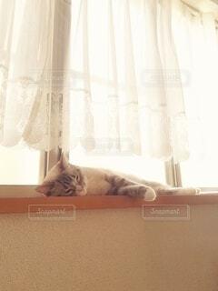 窓際で寝る猫の写真・画像素材[3856938]