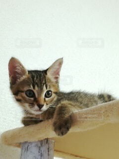 子猫の写真・画像素材[3909250]
