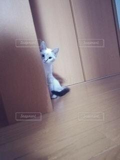 人見知りな子猫の写真・画像素材[3909254]