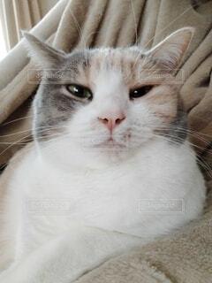 眠そうな猫の写真・画像素材[4122335]