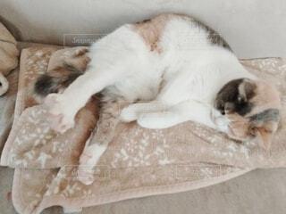 伸びをする猫の写真・画像素材[4124661]