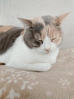 猫の寝顔の写真・画像素材[4124664]