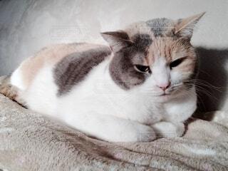 ソファの上の猫の写真・画像素材[4124663]