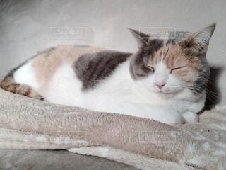 猫の寝顔の写真・画像素材[4124665]