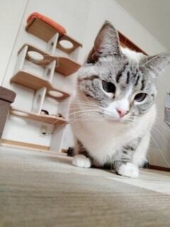 何かが気になる猫の写真・画像素材[4124678]